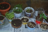 Developing a green thumb